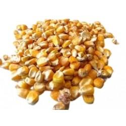 Kukurydza ziarno 20 kg.